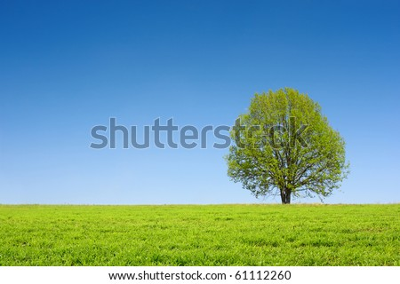 Alone tree on green meadow and clear blue sky - stock photo