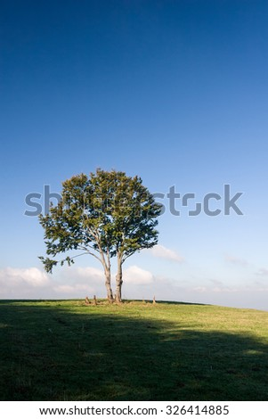 Alone tree on meadow against deep blue sky with clouds - stock photo