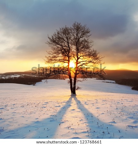 Alone tree on meadow at winter with sun rays - stock photo