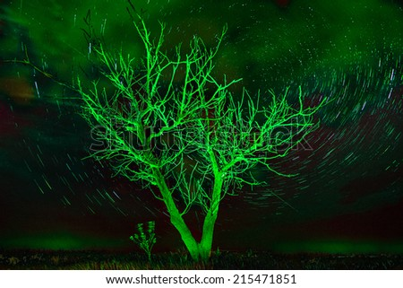 Alone tree on night sky with stars, star trails in unusual green light - stock photo