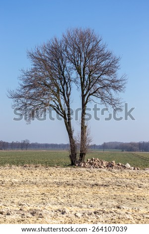 Alone tree on the big large field - stock photo
