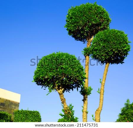 Alone tree on the green garden - stock photo