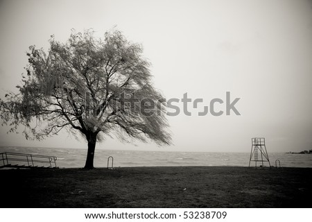 alone tree with lake - stock photo