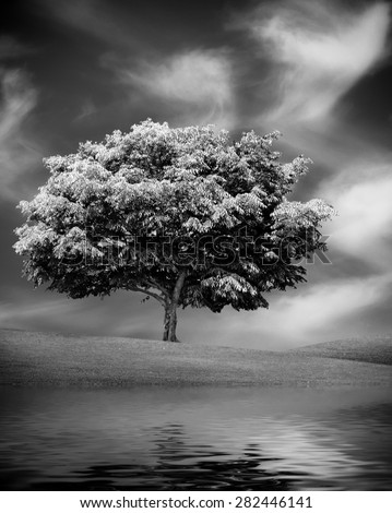 Alone tree with water reflection, White and black picture. Nature outdoor scene - stock photo