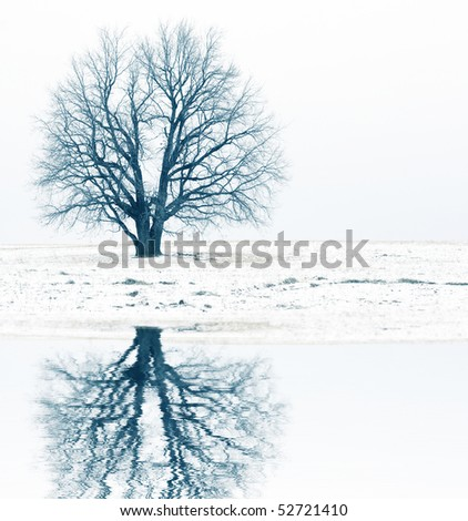 Alone tree without leaves on snowy meadow and reflection - stock photo