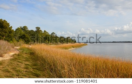 Along the shore in North Carolina with a grass blowing in the breeze. Colors include green, gold and blue. - stock photo
