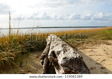 Along the shore in North Carolina with an old log along the shore and grass blowing in the breeze. Colors include green, gold and blue. - stock photo