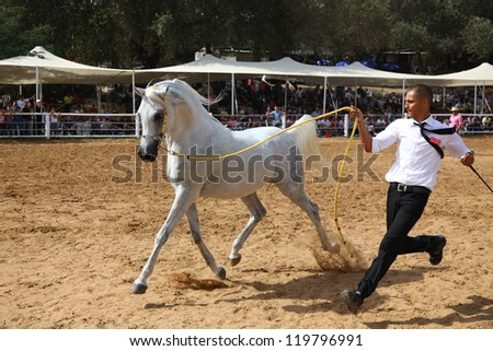 ALONIM, ISRAEL - OCTOBER 20: Handler shows off his fine Arabian horse during the 32nd National Arabian horse show and championship. 190 horses took part in Alonim, Israel, 20 October 2012 - stock photo