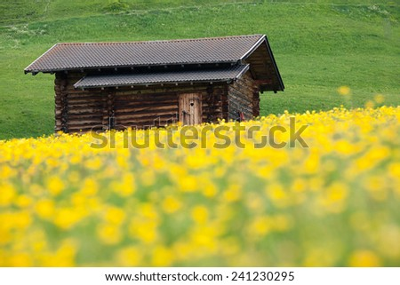 Alp meadow in spring - stock photo