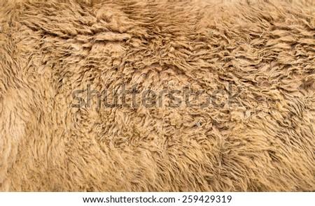 Alpaca textured - stock photo