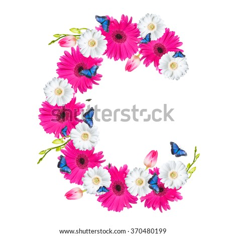 Alphabet C, flower isolated on white background. Gerber, tulips and butterfly  - stock photo