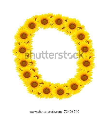 alphabet O , sunflower isolated on white background - stock photo