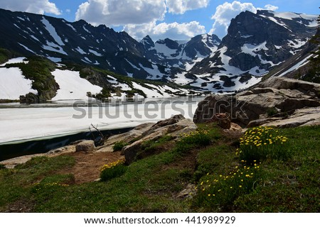 alpine buttercups at isabelle lake, indian peaks wilderness area, colorado - stock photo