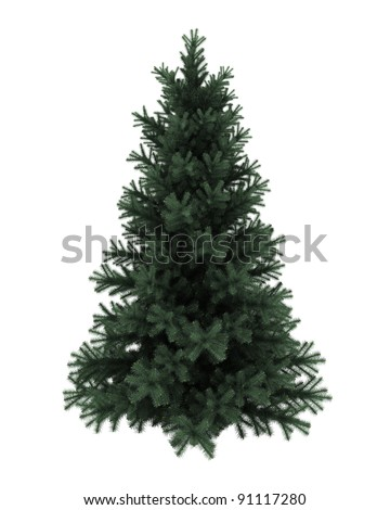 Alpine fir tree isolated on white background