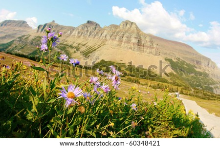 Alpine flowers at Garden Wall - stock photo