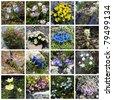 Alpine flowers - collage - stock photo