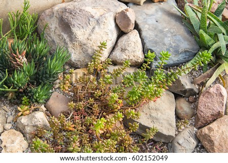 Prepossessing Alpine Garden Stock Images Royaltyfree Images  Vectors  With Luxury Alpine Garden Of Succulents Cacti Stones Gravel With Easy On The Eye Garden Centres Northampton Also Brunch Near Covent Garden In Addition Cadbury Garden Centre Congresbury And Covent Garden Travel Lodge As Well As Polpo Covent Garden London Additionally Sliding Doors To Garden From Shutterstockcom With   Luxury Alpine Garden Stock Images Royaltyfree Images  Vectors  With Easy On The Eye Alpine Garden Of Succulents Cacti Stones Gravel And Prepossessing Garden Centres Northampton Also Brunch Near Covent Garden In Addition Cadbury Garden Centre Congresbury From Shutterstockcom