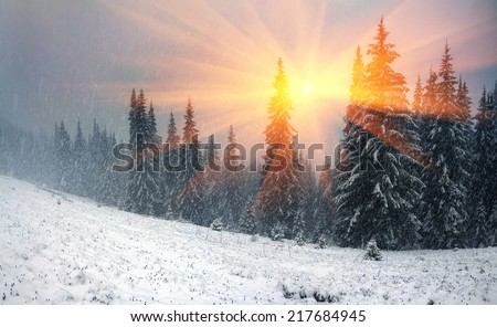 Alpine is the climate in spring or autumn when the snow storm comes and sweeps the beautiful, blizzard,mountains, old villages, pastures, young and fresh flowers, breaking trees and storm avalanches - stock photo