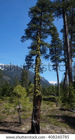 Alpine Lakes Wilderness, Wenatchee National Forest, Mt. Baker National Forest - stock photo