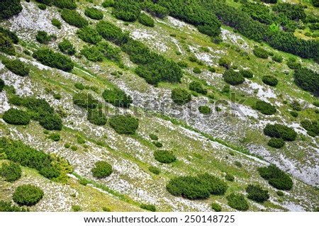 Alpine landscape in with junipers - stock photo