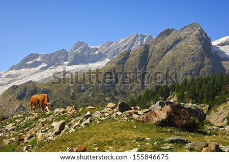 Alpine landscape with cow, Valais, Switzerland - stock photo