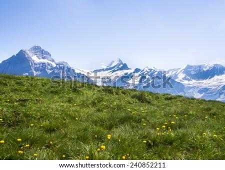 Alpine meadow - stock photo