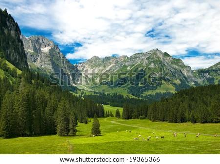 Alpine meadow in central Switzerland. Arnibach Valley, near Engelberg. - stock photo