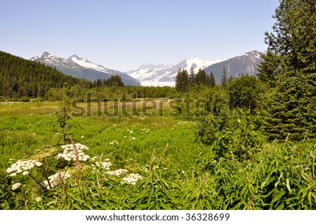 alpine meadow in summer - stock photo