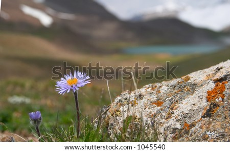 Alpine  meadow in the morning 2 - stock photo