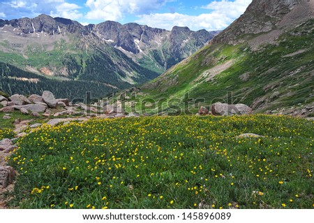 Alpine Meadow, San Juan Mountains, Colorado Rockies, USA - stock photo