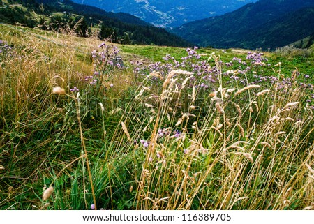 Alpine meadow with grass and flowers on show, mountain range in background - stock photo
