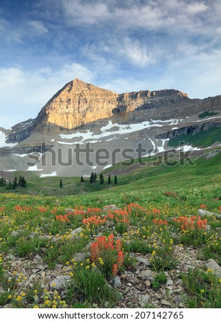 Alpine meadow with wildflowers in the Utah mountains, USA. - stock photo