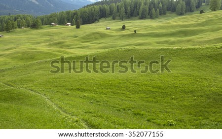 Alpine meadows. The Dolomites