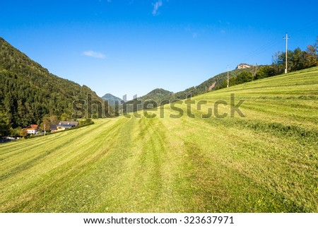 Alpine mountain pasture in the Hintergebirge or Limestone Alps in upper Austria. It is the largest closed and virtually uninhabited forest area in Austria. The meadow will be used for transhumance - stock photo