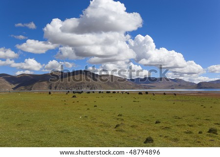 alpine pasture under the blue sky and white cloud, tibet - stock photo
