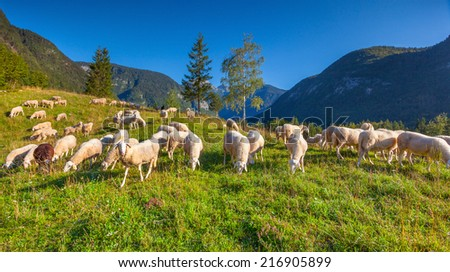 Alpine pastures in the Slovenian Alps. Triglav National Park. - stock photo