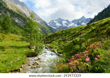 Alpine roses and wild brook