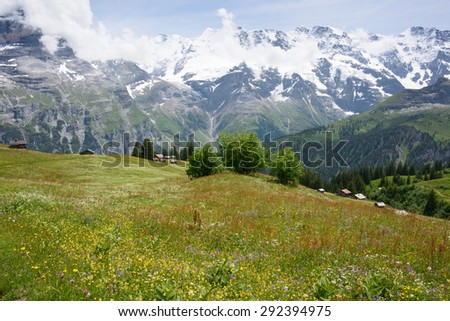 Alpine spring flowers in meadows at Schiltalp, with chalets in distance and view of mountains, in the Swiss alps near Interlaken.