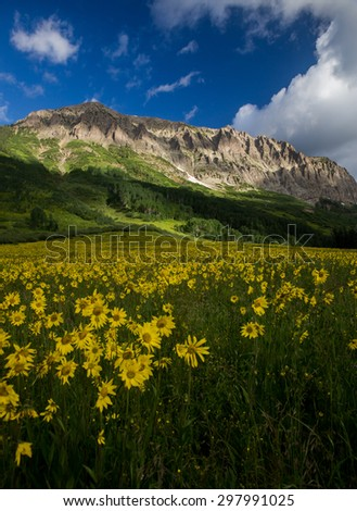 Alpine Sunflowers Basking in the Glow of Gothic Mountain - stock photo