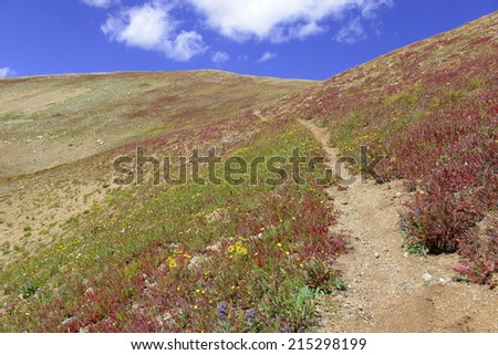 Alpine Tundra Groundcover in Autumn colors, Rocky Mountains, USA - stock photo