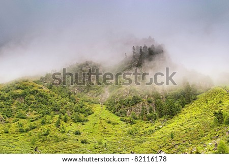 Alps forest in clouds