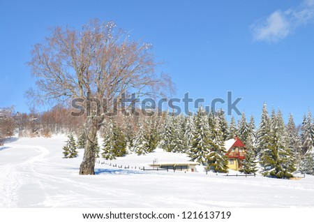alps snow landscape with house among green pine trees, and no leafs tree on the bright sky - stock photo