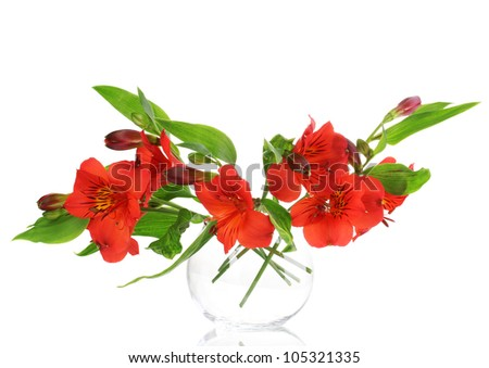 Alstroemeria in vase isolated on white