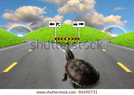 Alternative.Turtles have the option of an abstract. - stock photo