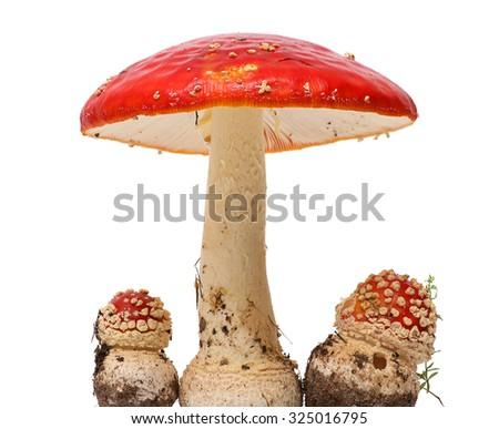 Amanita poisonous mushroom, isolated - stock photo