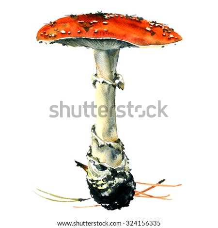 Amanita poisonous mushroom, isolated, watercolor painting on white background - stock photo