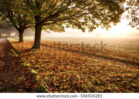 Amazing autumn leaves and trees with a misty sunrise. A path leads off into the distance