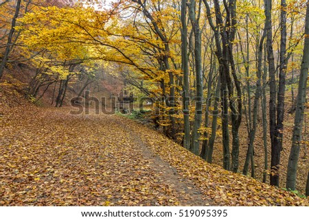Amazing Autumn panorama of mountain foodpath, Vitosha Mountain, Sofia City Region, Bulgaria