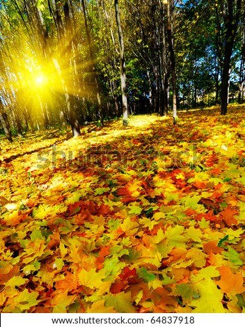 Amazing autumnal forest and nice sunset. - stock photo