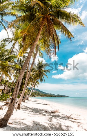 Amazing beautiful isolated tropical paradise bounty beach at Koh Samui Island in Thailand with palms, white sand and clean clear sea water